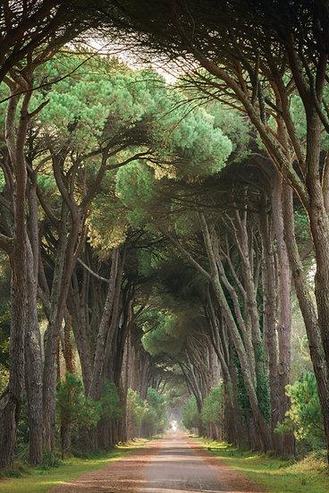 Path to Pisa