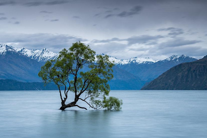 Adam Crews Imagery, Adam Crews, Adam Crews Photography, New Zealand, Wanaka, Mountains, That Wanaka Tree, Wanaka Tree, Lake