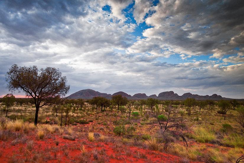Desert Reds