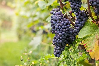 wine-980218_1920.jpg