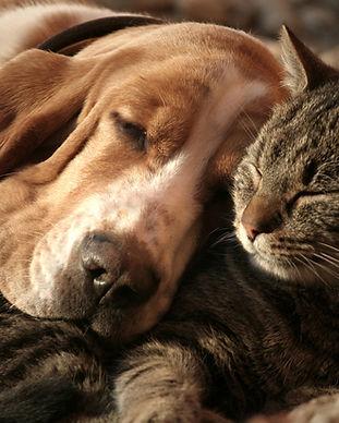 3348095-dog-cat-1440.jpg