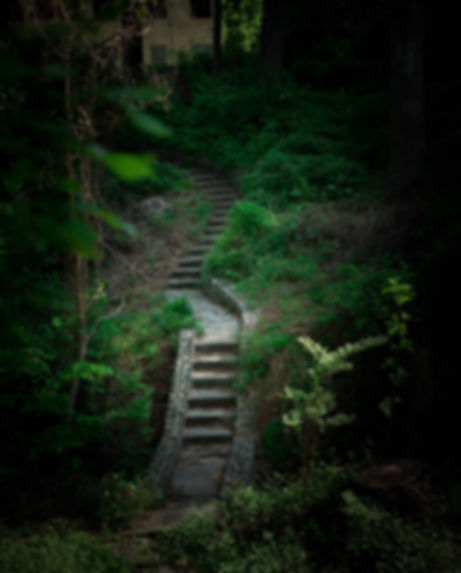 the path (1 of 1).jpg