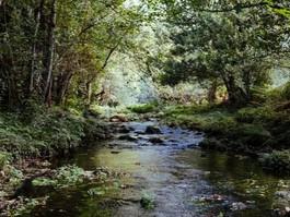 New Zealand Forests: Navigational Tips