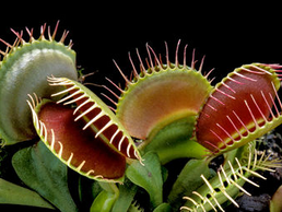 Carnivorous Plant Growing: New Zealander's Guide