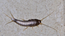 Top 3 Most Annoying Household Pests