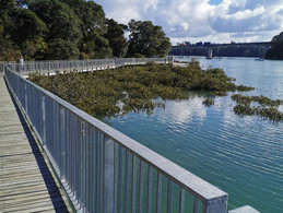 Hobsonville Point: The Pier