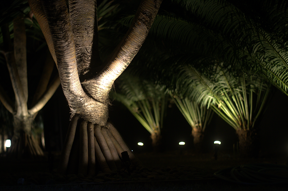 Background Jardim 1.png