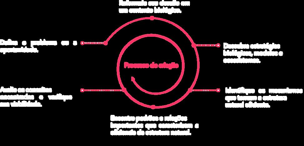 Processo de design Biomimético.png