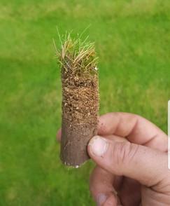 Free lawn survey thatch