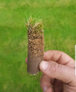 Thatch removal via scarification