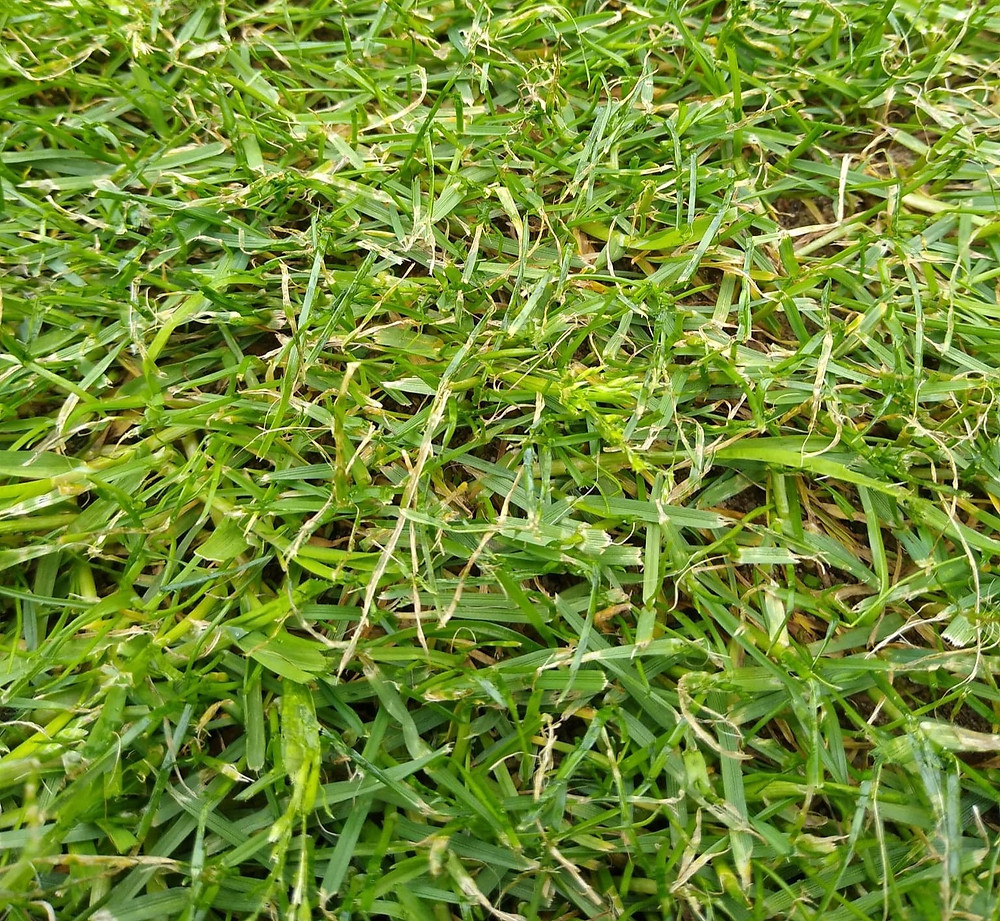 Kingsbury Lawn Care | Lawn Treatment Service | Damaged Grass