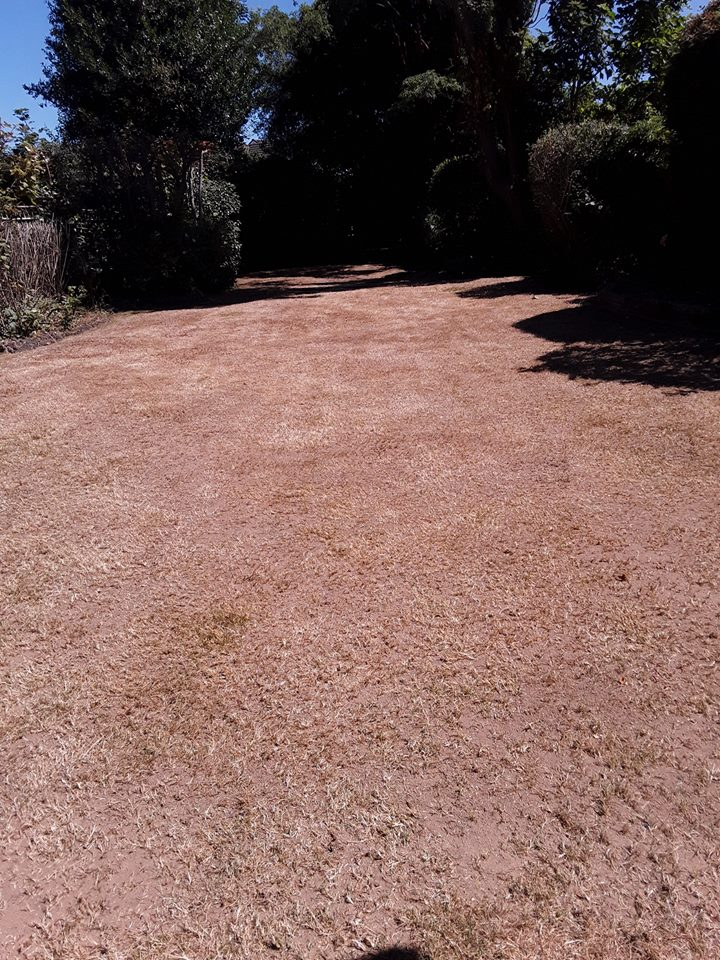 Lawn Recovery Sutton Coldfield