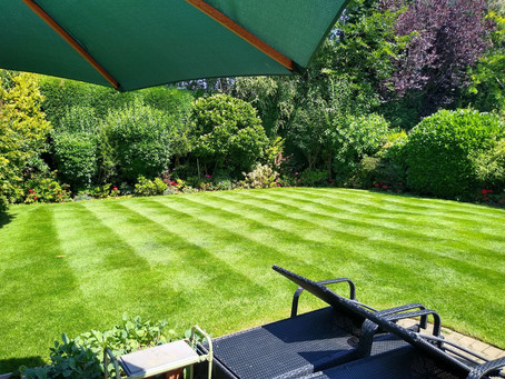 Total Lawn Makeover! How to Improve Your Lawn in 3 Easy (ish) Steps!
