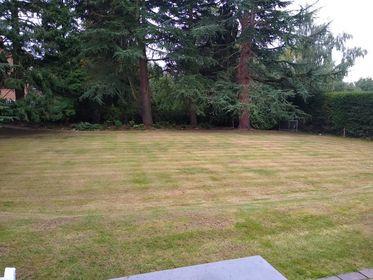 Four Oaks lawn renovation