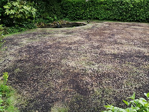 Kingsbury Lawn Care / lawn treatment service / this image is of a lawn following a Lawn Rescue visit with limited grass remaining and a covering of top dressing