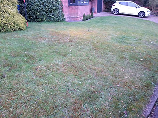 Kingsbury Lawn Care | Moss Control | This image is of a lawn following a moss treatment. There is a clear line of live and dehydrated moss with the neighbours lawn