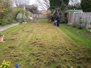 Kingsbury Lawn Care | Lawn Scarification | This image is of a lawn being scarified by an expierenced lawn care technican. There is a lot of debris being removed from this small lawn