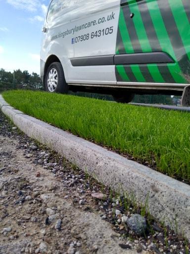 Grass Seed Tamworth