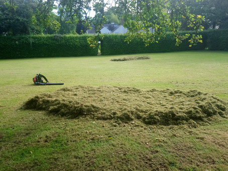What Does a Lawn Care Service Do?