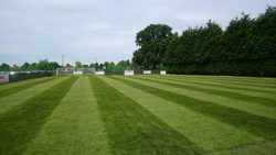 Deep green grass Nuneaton