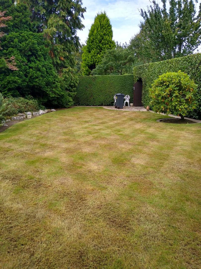 Sutton Coldfield lawn renovation
