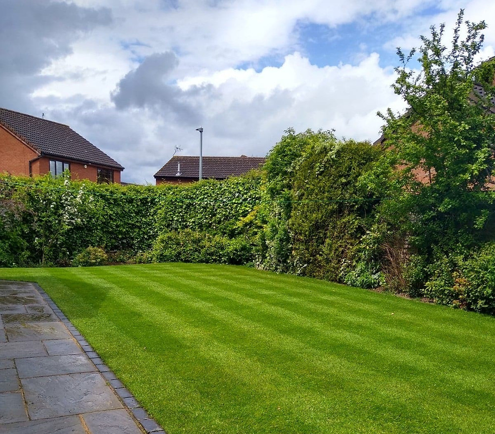 Kingsbury Lawn Care | Lawn Care Service | Heathy Thick Lawn