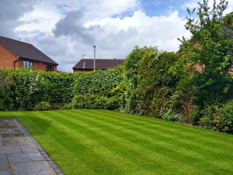 How to Replace an Unhealthy Lawn with Thick Lush Green Grass!
