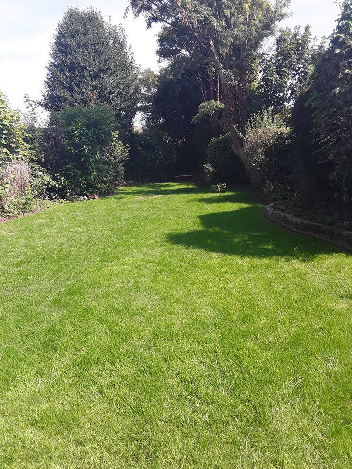 Healthy Lawn Sutton Coldfield