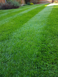 Lush weed free grass Sutton Coldfield