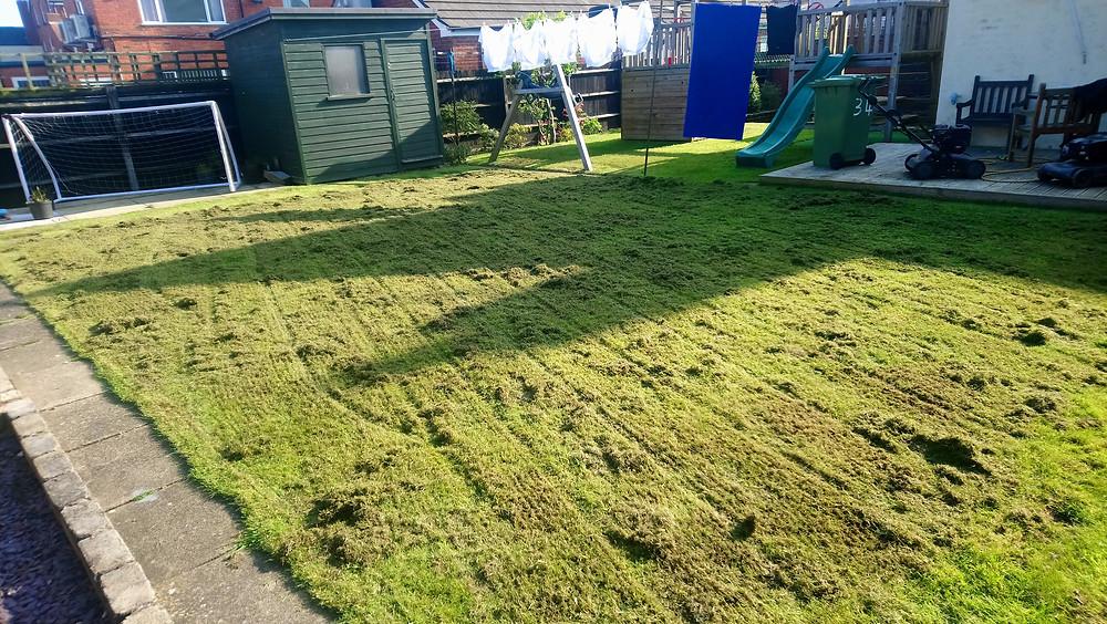 Lawn scarification in Nuneaton
