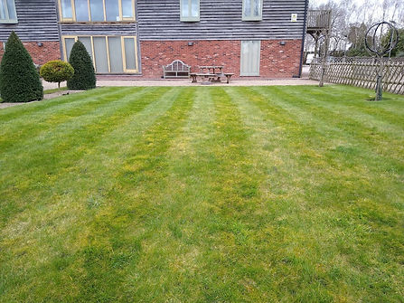 Kingsbury Lawn Care | Moss Control | This image shows an untreated lawn which contains moss and an inconsistent appearance