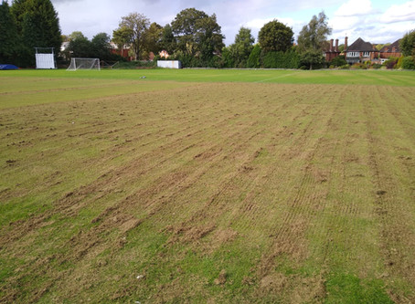 End of Season Renovation Thoughts - Cricket