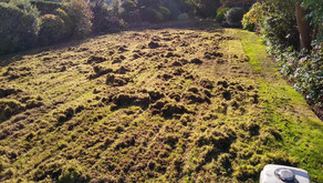 Lawn Repair & Renovation - The Results!