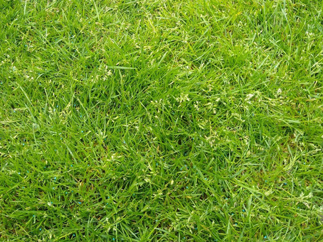 Weed Grass in Lawns? Our Top Tips For Control