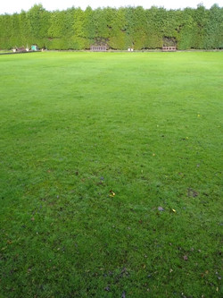 Bedworth Scarifying and seeding