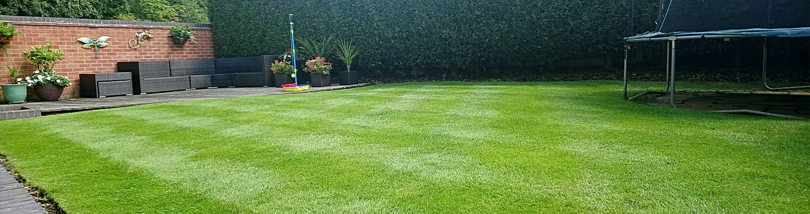 Lush weed free family lawn