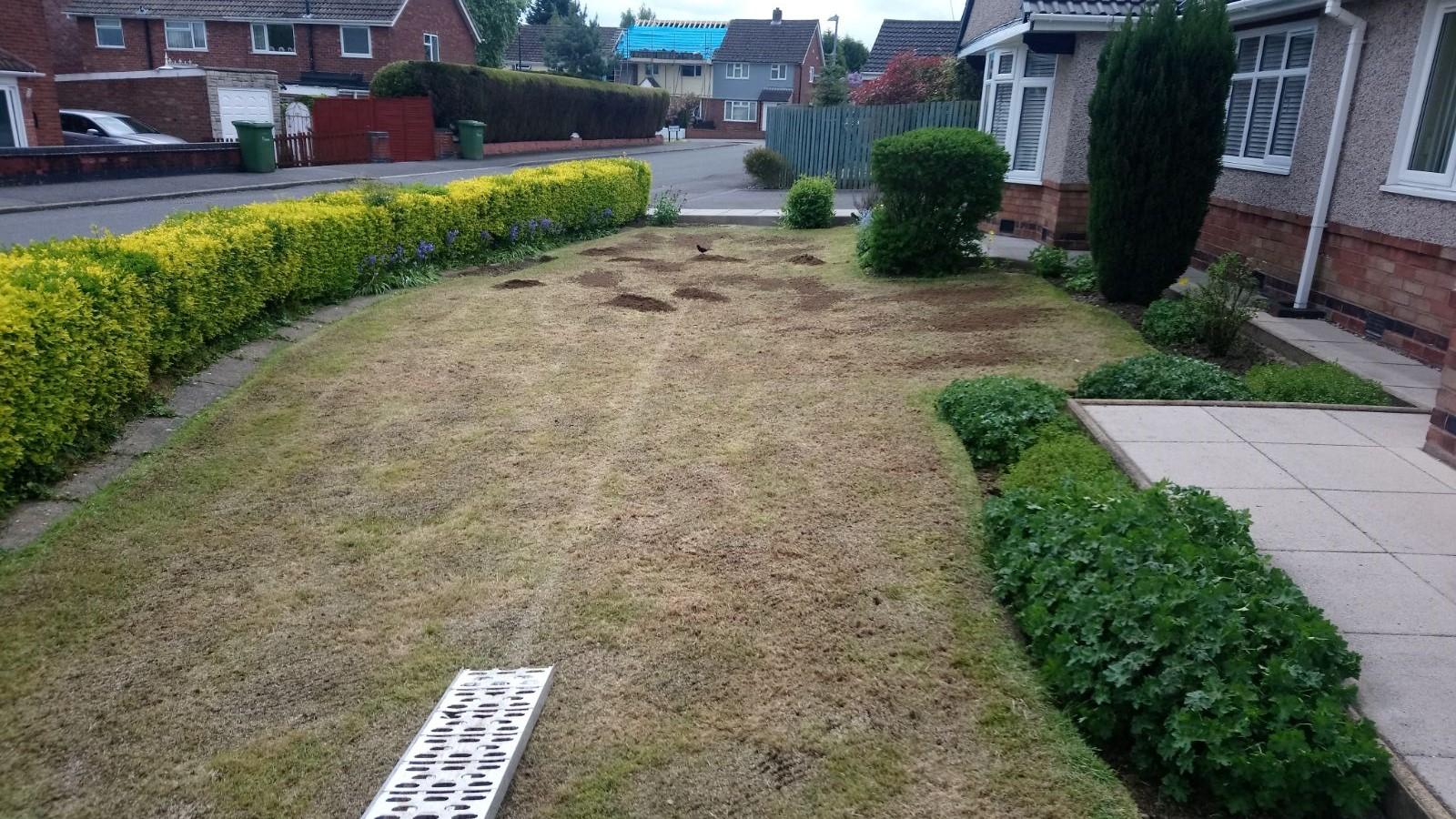 Lawn renovation Bedworth