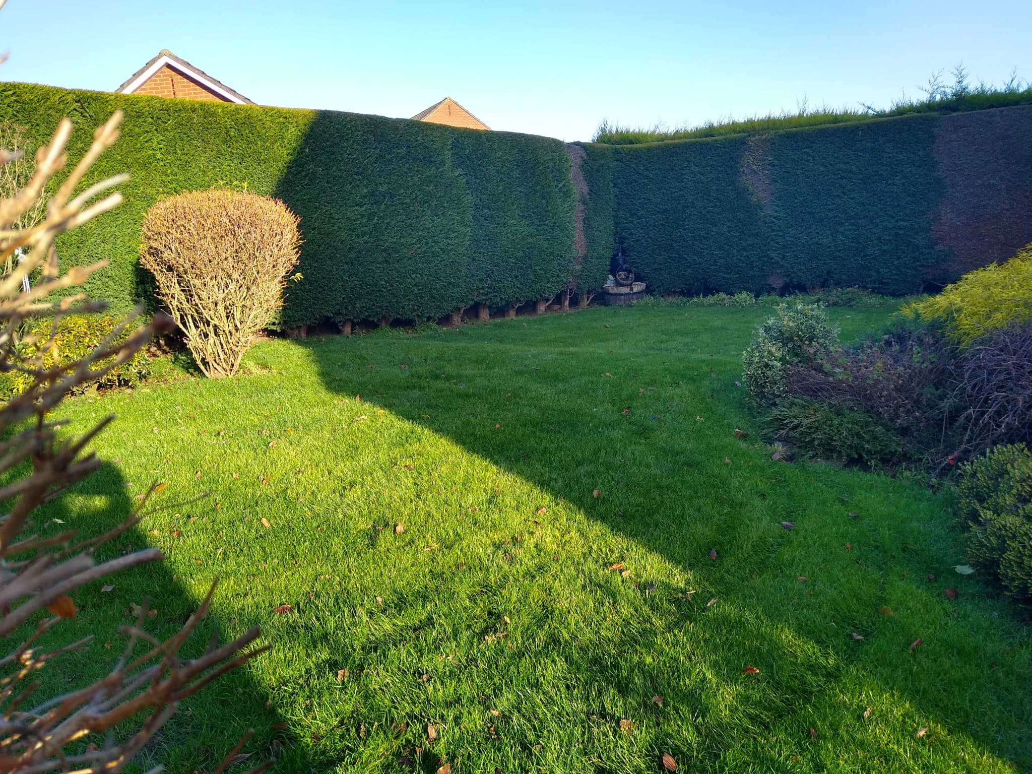 Lawn following professional works
