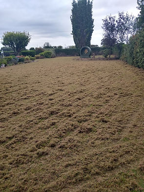 Kingsbury Lawn Care | Lawn Scarification | This image is of a large lawn during the process of scarification. There is a great deal of debris which has been removed from the lawn