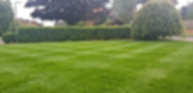 Expert lawn care renovation work deep green lawn