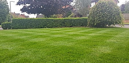 Expert lawn care renovation work deep green lawn