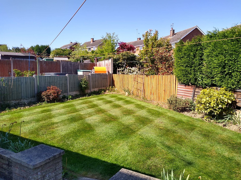 Kingsbury Lawn Care / lawn treatment service / this image is of a heathy lawn with a diamond pattern