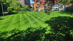 Attractive lawns following treatment