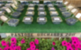 IMG_7014 - Copy_edited.jpg