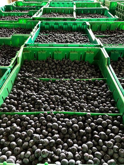 berry bins.jpg