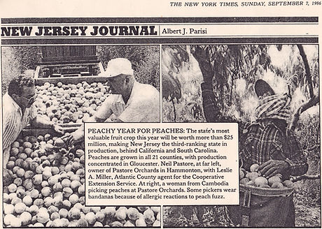 Pastore Orchards New York Times article