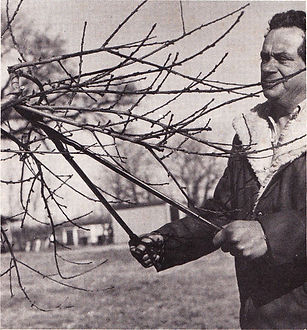 Neil Pastore Jr. pruning peaches