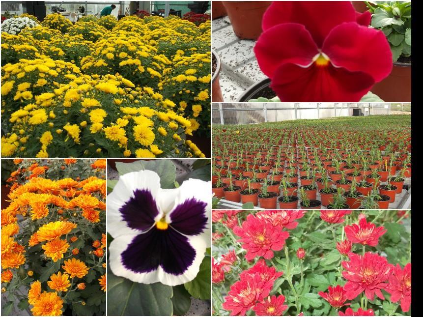 Centro de Produção de Plantas CERCIG