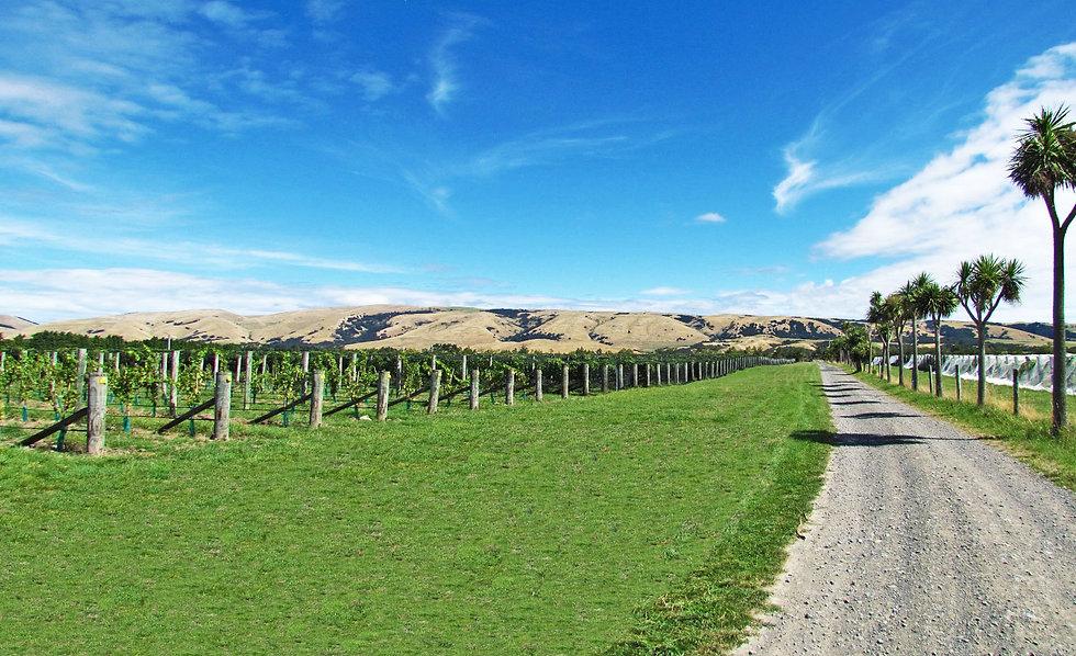Pond-Paddock-Vineyard-Panorama.jpg