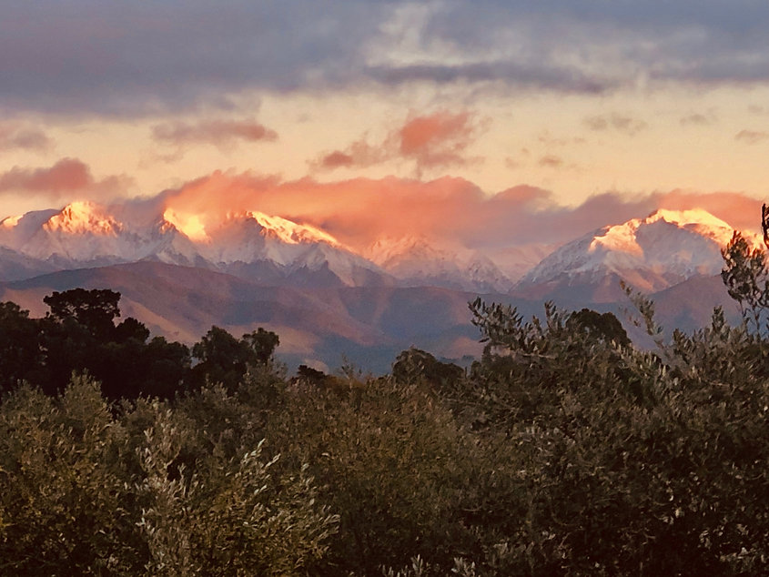 Snow caped mountains at golden hour looking out over the Loopline Olives grove